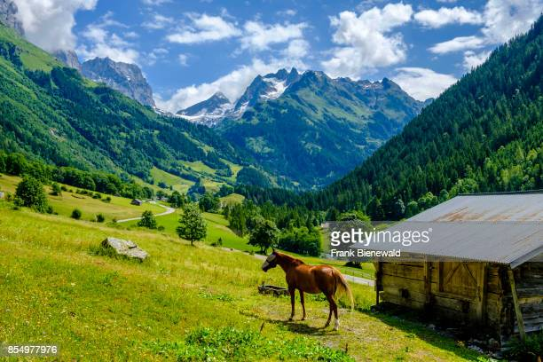 INNERTKIRCHEN BERN SWITZERLAND A horse is grazing on a green meadow trees and high mountains in the distance
