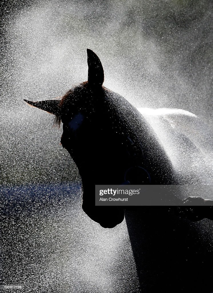 A horse is hosed down after racing on a warm evening at Goodwood on August 26, 2016 in Chichester, England.