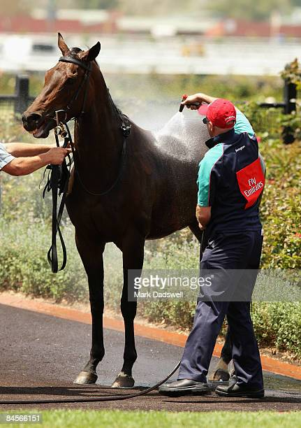 A horse is hosed down as it leaves the Mounting Yard after Race Four the Antler Luggage Handicap during the Coolmore Lightning Stakes Day meeting at...