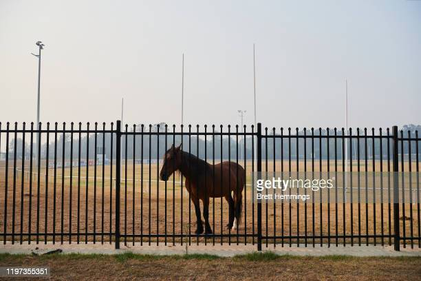 A horse is kept safe on a AFL field in an evacuation centre on January 04 2020 in Batemans Bay Australia A state of emergency has been declared...
