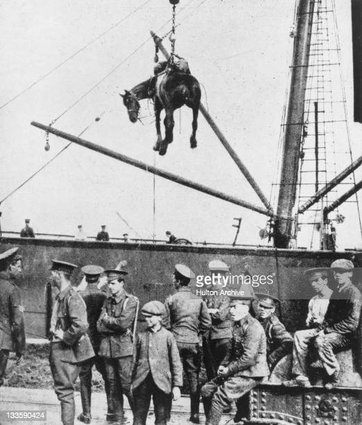 A horse is landed from a British military transport ship at Boulogne France during World War I August 1914 Original publication Illustrated War News...