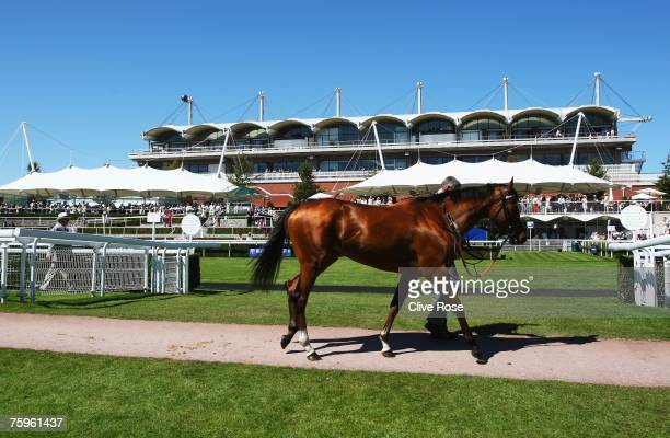 A horse is lead away from the parade ring at Goodwood Racecourse on August 4 in Goodwood England Today is the fifth day of The Glorious meeting held...
