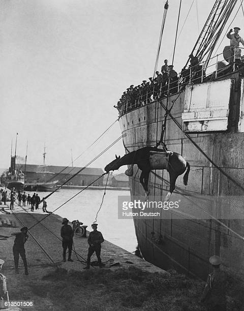 A horse is lowered by a winch and sling from a troopship to the quayside They are landing at Salonika harbor for the Salonika Campaign