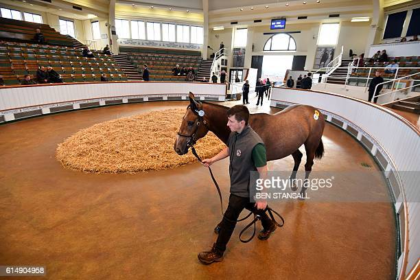 A horse is paraded in the auction ring at the Tattersalls Bloodstock Auction in Newmarket north of London on October 11 2016 There may have been much...