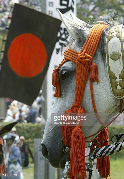 Horse is pictured as armoured Samurai horsemen take part in a parade before the ancient horse racing event during the Soma-Nomaoi festival on July...