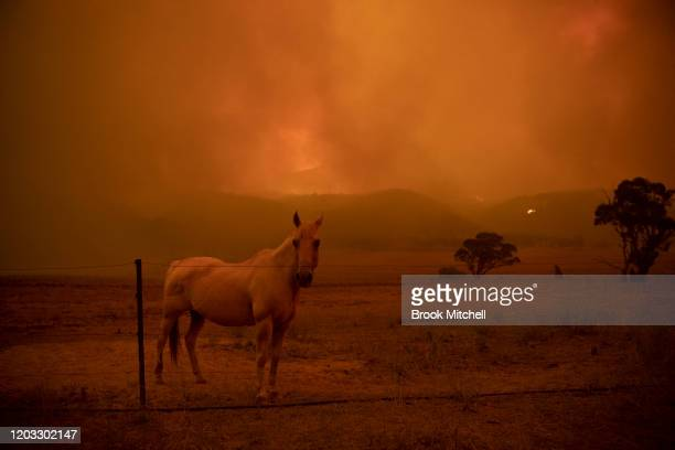 A horse is pictured on the property of Claire and Laurence Cowie The couple stayed to defend their home on Bumbalong Road Bredbo North losing the...