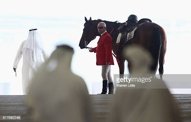 A horse is prepared prior to the Dubai World Cup at Meydan Racecourse on March 26 2016 in Dubai United Arab Emirates