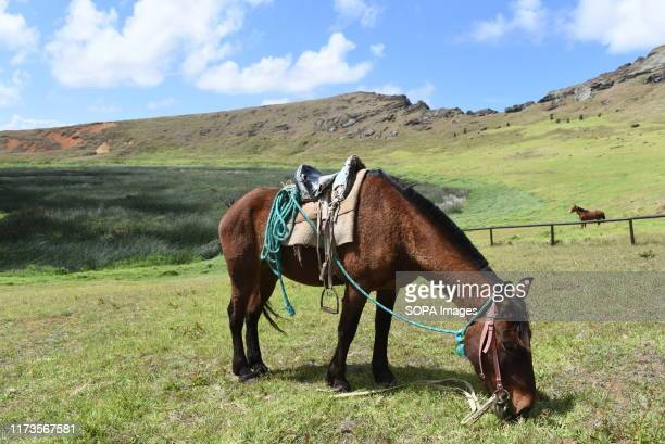 A horse is seen grazing near Rano Raraku volcano The population of wild horses on Easter Island also known as Rapa Nui a Chilean island in the south...