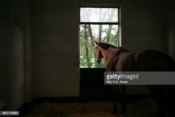 A horse is seen in the horse stables in the country club on June 10 2017 in Hong Kong Hong Kong Hong Kong is marking 20 years since the territory was...