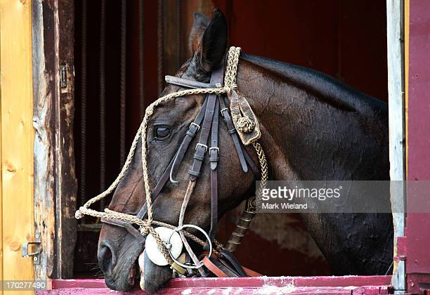 A horse is seen in the stables during the Lotto Festival 2013 at Galopp Munich on June 9 2013 in Munich Germany