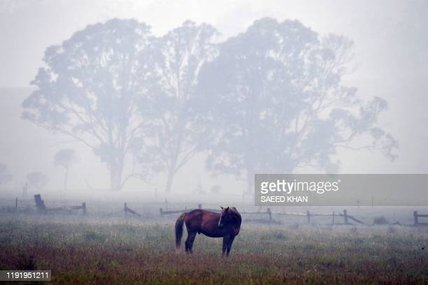A horse is seen through dense smoke from a bushfire on a farm in Eden in Australia's New South Wales state on January 6 2020 January 5 brought milder...