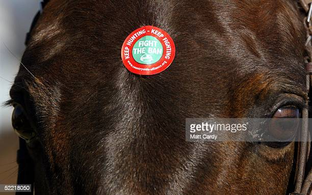 A horse is seen withwith prohunting stickers on it's head at the start of the Avon Vale Hunt at Monk's Park on February 19 2005 near Corsham...