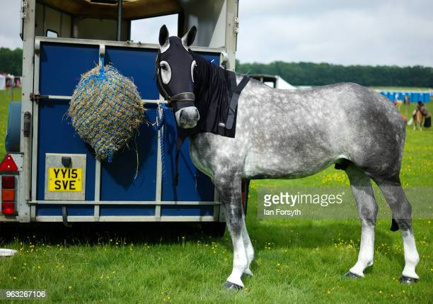 A horse is tethered to the rear of a trailer during the Duncombe Park Country Fair on May 28 2018 in Helmsley England Set in the grounds of one of...