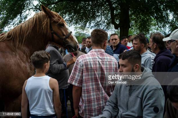 Horse is vued by potential buyers down the 'mad mile' during the annual Appleby Horse Fair on June 07, 2019 in Appleby-in-Westmorland, England. The...