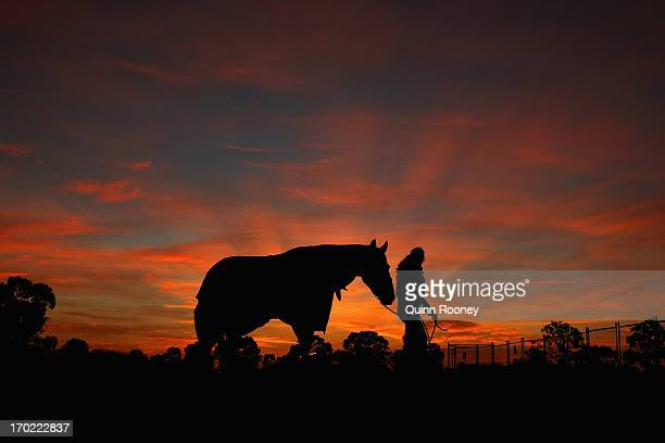 Horse is walked in the paddock before the start of the Cross Country during the Melbourne International Three Day Event at Werribee Park Mansion and...