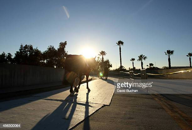 A horse is walked outside during the Longines Los Angeles Masters at Los Angeles Convention Center on September 25 2014 in Los Angeles California