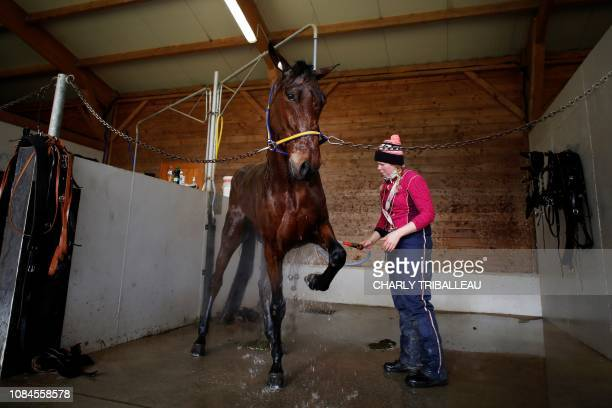 A horse is washed after a training session on January 18 2019 in Mortrée northwestern France