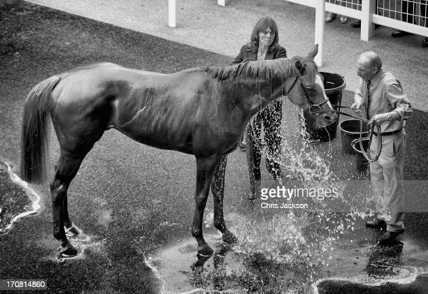Horse is washed down after a race during Royal Ascot at Ascot Racecourse on June 18, 2013 in Ascot, England.