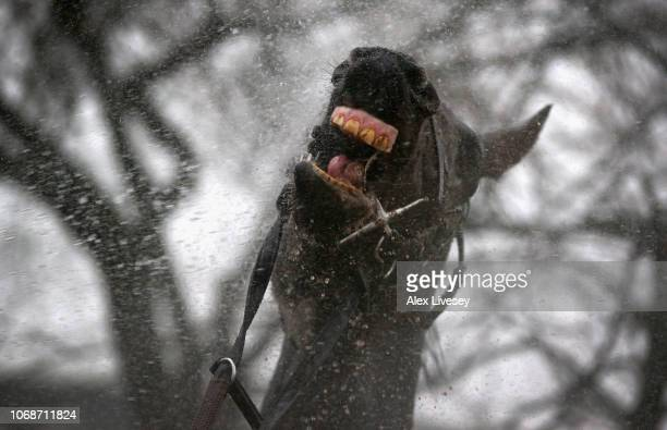 A horse is washed down after The Watch Racing Uk Anywhere Maiden Hurdle Race at Haydock Racecourse on December 5 2018 in Haydock England