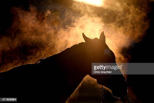 Horse is washed in the barn area during morning training for the Kentucky Derby at Churchill Downs on May 1, 2015 in Louisville, Kentucky.