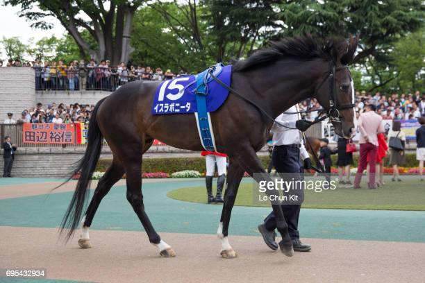 Horse Isla Bonita being led around the paddock during Race 11 Yasuda Kinen at Tokyo Racecourse on June 4 2017 in Tokyo Japan