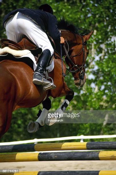 horse jumping - bay horse stock photos and pictures