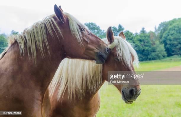 horse kiss - i love you frase em inglês - fotografias e filmes do acervo