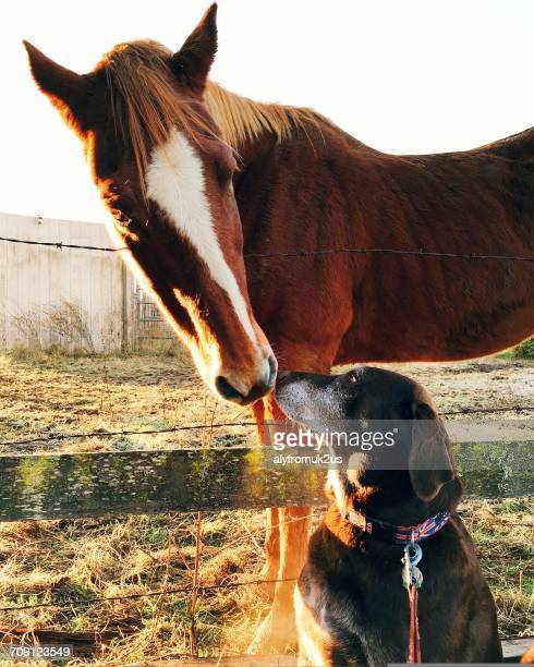 Horse kissing a dog