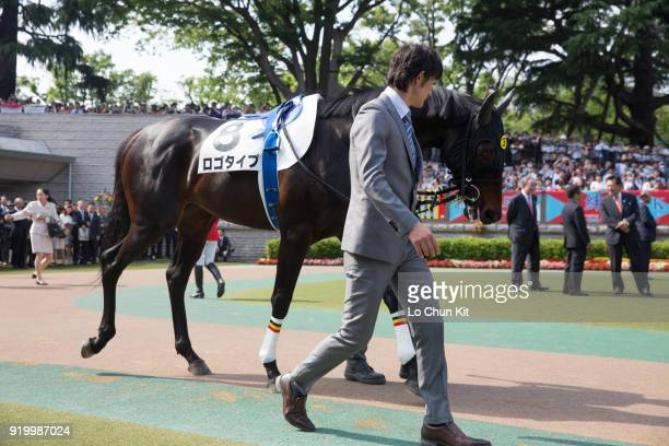 Horse Logotype being led around the paddock during Tokyo Yushun at Tokyo Racecourse on May 26 2013 in Tokyo Japan Tokyo Yushun Japanese Derby is the...
