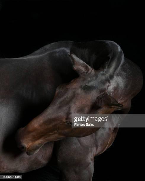 horse looking away from camera - racehorse stock-fotos und bilder