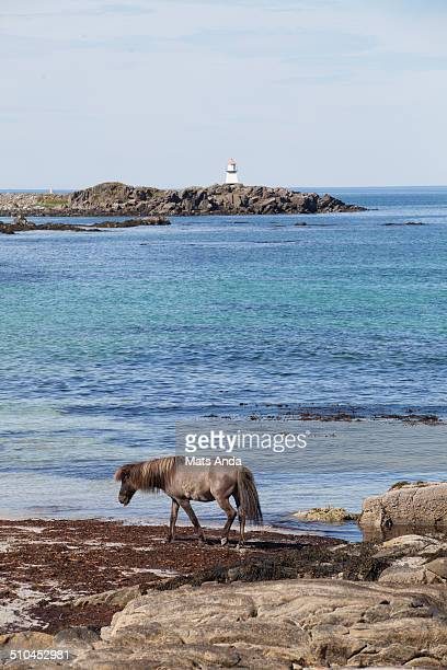 Horse looking for food in the wrong place; beach