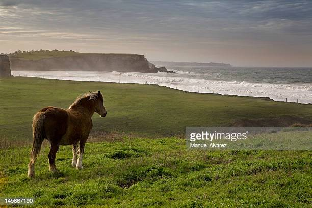 Horse looking in Cantabria