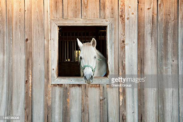 a horse looking out a barn window. - plant city stock pictures, royalty-free photos & images