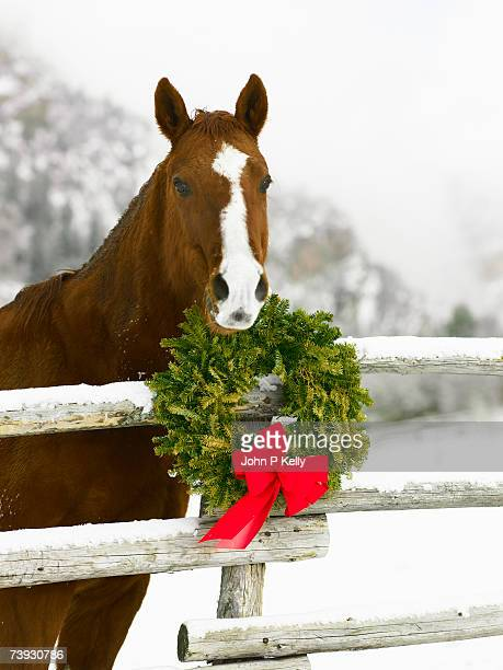 horse looking over fence in snow next to christmas wreath - christmas horse stock pictures, royalty-free photos & images