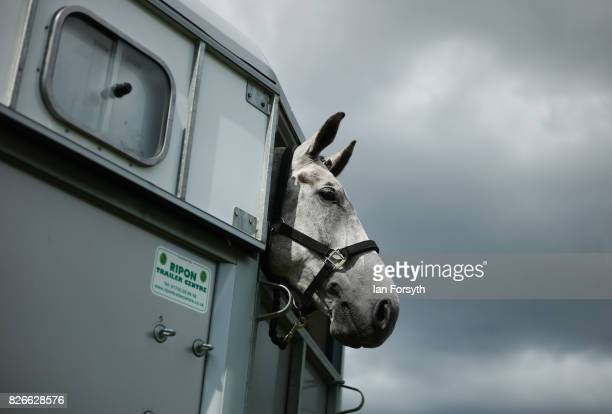 Horse looks out from its horsebox during the Osmotherley Country Show on August 5, 2017 in Osmotherley, England. The annual show hosts pony, cattle...