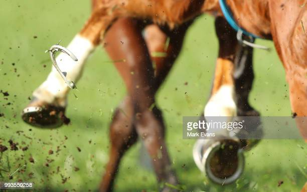 A horse looses a shoe in race 5 during Sydney Racing at Royal Randwick Racecourse on July 7 2018 in Sydney Australia