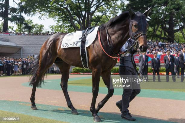 Horse Lovely Day being led around the paddock during Tokyo Yushun at Tokyo Racecourse on May 26 2013 in Tokyo Japan Tokyo Yushun Japanese Derby is...