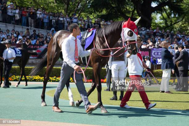 Horse Lys Gracieux being led around the paddock during the Yasuda Kinen at Tokyo Racecourse on June 3, 2018 in Tokyo, Japan.