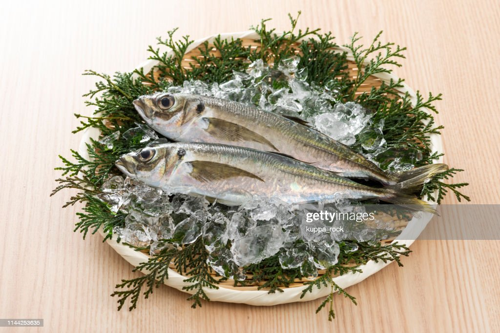 Horse mackerel : Stock Photo