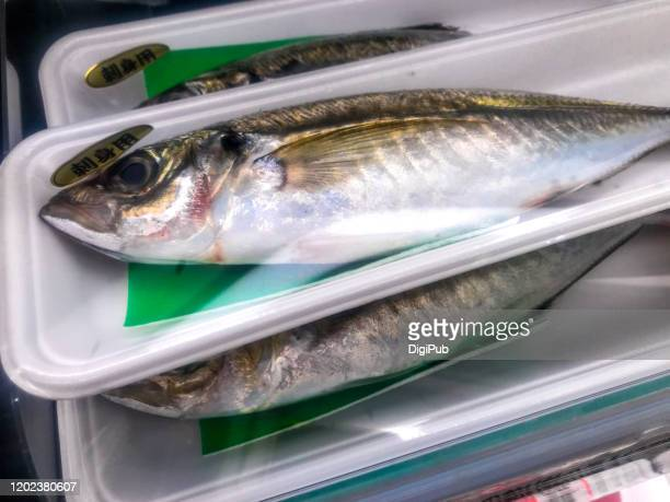 horse mackerel - trachurus japonicus stock pictures, royalty-free photos & images