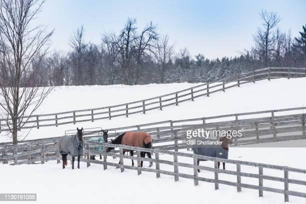 Horse Meet-up in Winter