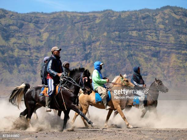 Horse of Bromo