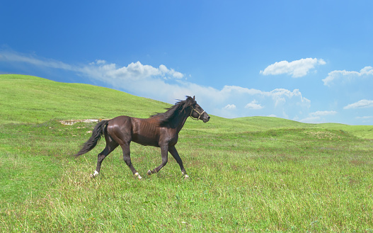 horse of cinnamon color runs freely at a gallop at the will of bright juicy hills with green grass 1029239258