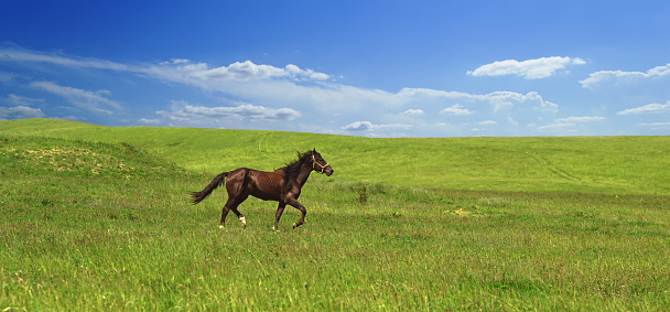 horse of cinnamon color runs freely at a gallop at the will of bright juicy hills with green grass 1029239308
