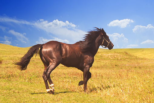horse of cinnamon color runs freely at a gallop at the will of bright juicy hills with green grass 1029239458