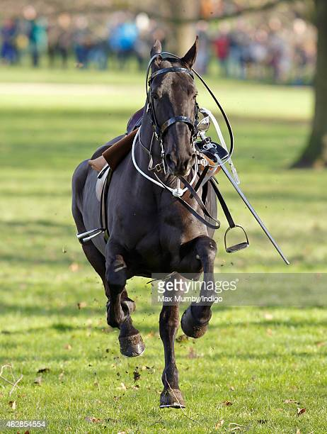 A horse of The King's Troop Royal Horse Artillery gallops through Green Park after losing it's rider during a 41 gun salute to mark the 63rd...