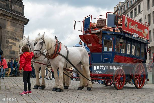 horse omnibus or tourist carriage in dresden, germany - shire horse stock pictures, royalty-free photos & images