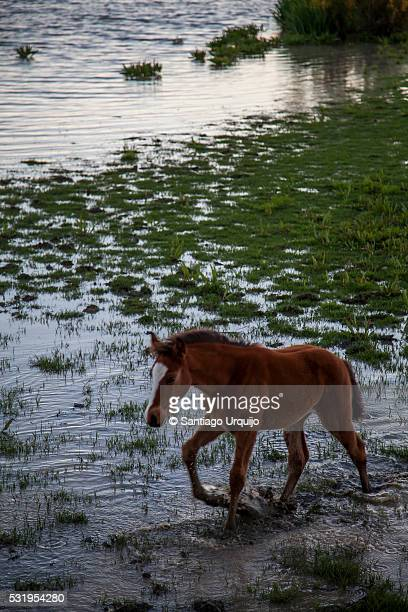 horse on a marsh - donana national park stock photos and pictures