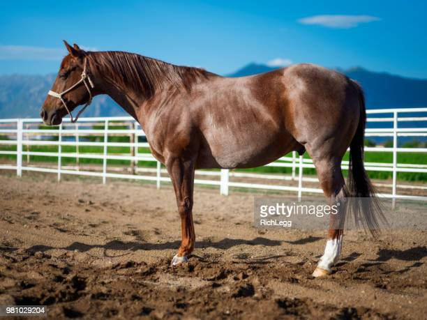 Horse on a Ranch