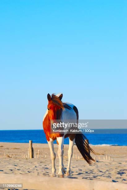 horse on beach - eén dier stockfoto's en -beelden